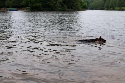Cody-swimming-9