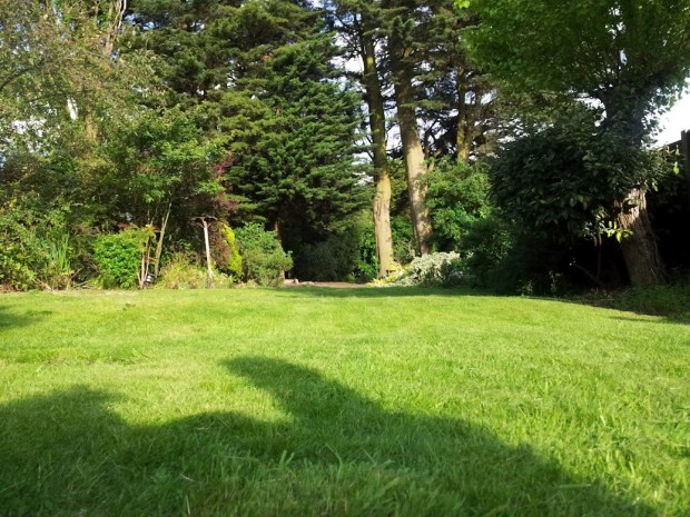 The lawn - after