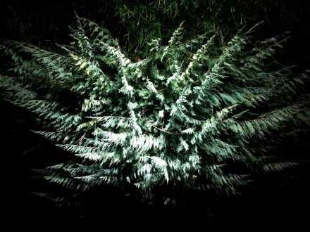 November-nights-13