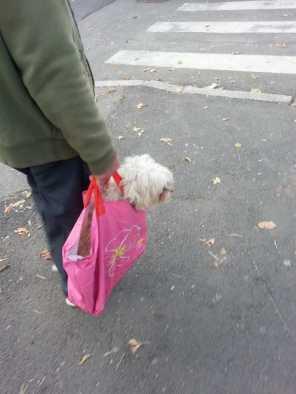 puppy-in-a-bag-04