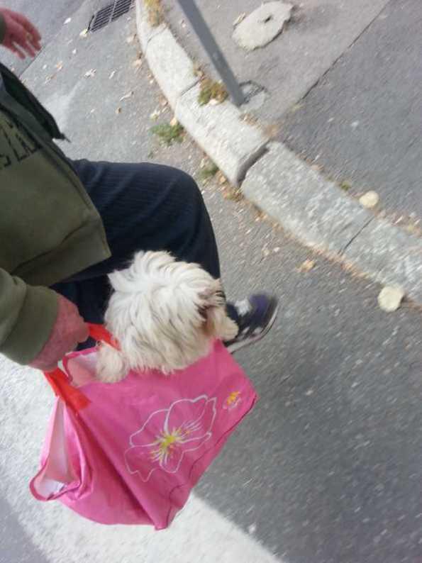 puppy-in-a-bag-05