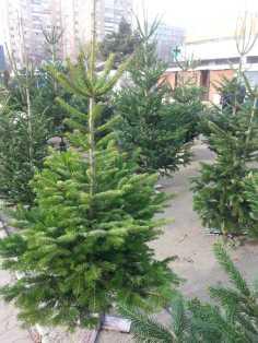 CHRISTMAS-TREE-SALE-01