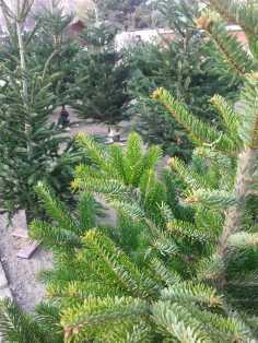 CHRISTMAS-TREE-SALE-02