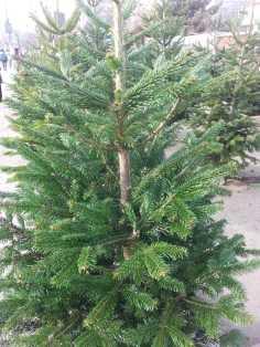CHRISTMAS-TREE-SALE-03
