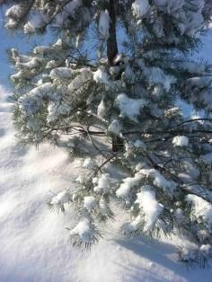 snow-on-trees-04