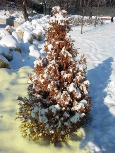 snow-on-trees-05