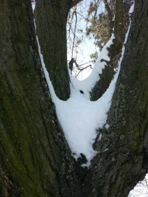White-blanket-of-snow-15