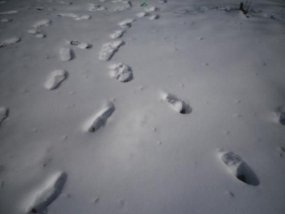 traces-snow-02