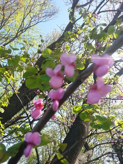 beautiful-pink-flowers-05