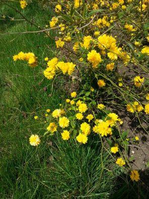 mopana-yellow-land-02