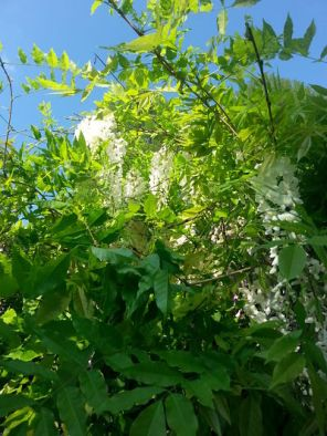 mopana-flowers-or-grapes-07