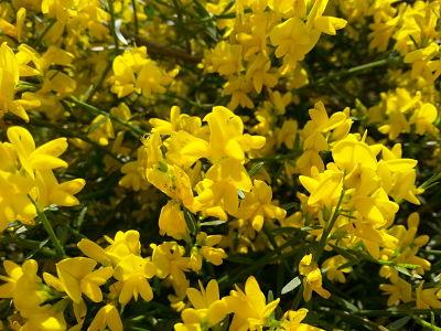 mopana-a-yellow-life-04