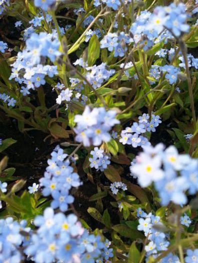 mopana-elegance-in-blue-01