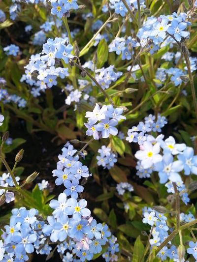 mopana-elegance-in-blue-02