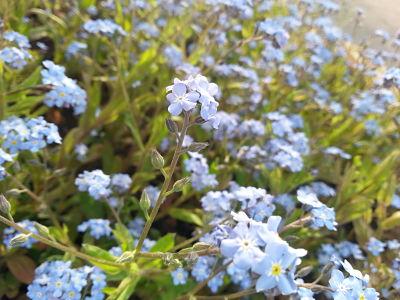 mopana-elegance-in-blue-03