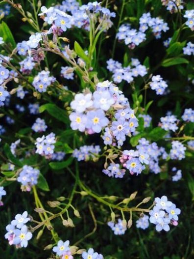 mopana-elegance-in-blue-05