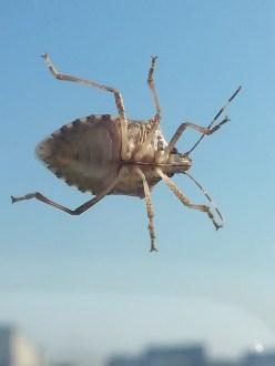mopana-a-bug-on-my-window-02