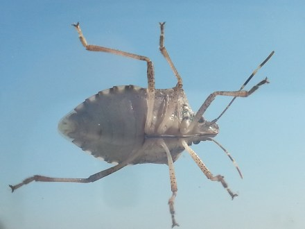 mopana-a-bug-on-my-window-03
