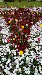 mopana-tulips-cismigiu-2017-03_opt