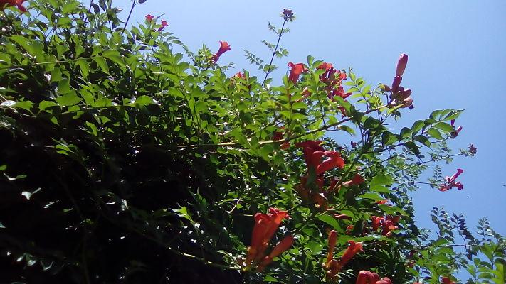 mopana-summer-beauty-06