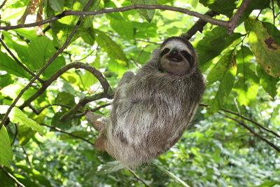 The sloth: natural slow motion