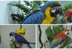 Animal foto