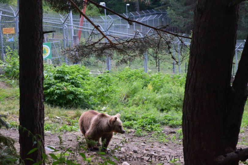 Парк мечки Белица