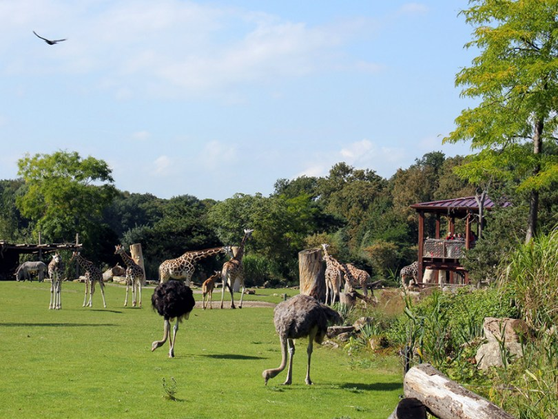 Зоологическата градина в Лайпциг