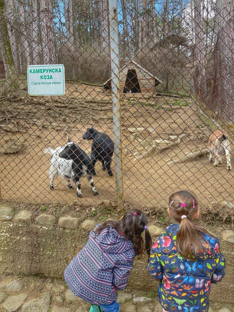 зоопарк хисарлъка кюстендил