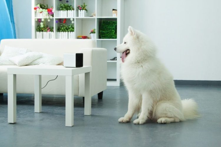petcube play 7