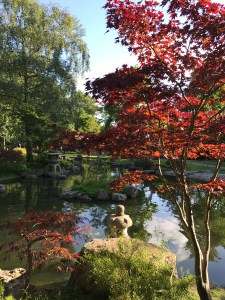 Japanese styled garden, kyoto garden, bonzai, zen, water, holland park, London