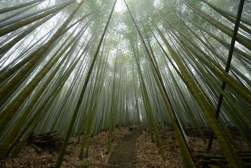 bamboo_green_tunnel