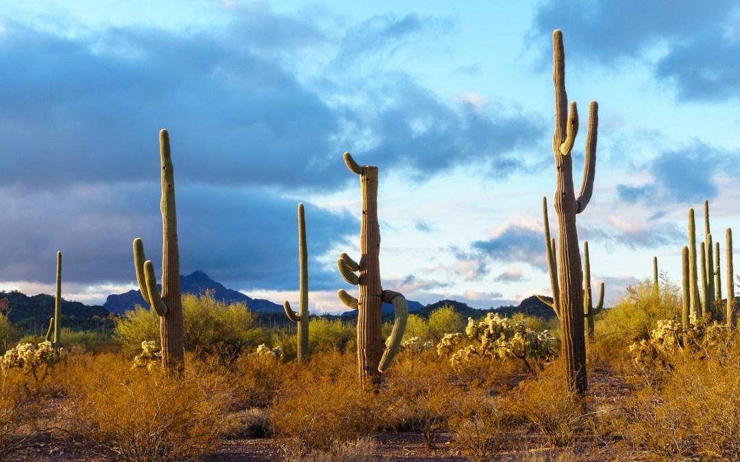 PCT Desert Hiking Tips & Advice