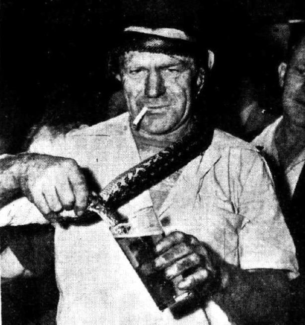 snake drinking beer