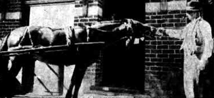 horse drinking parkerville hotel