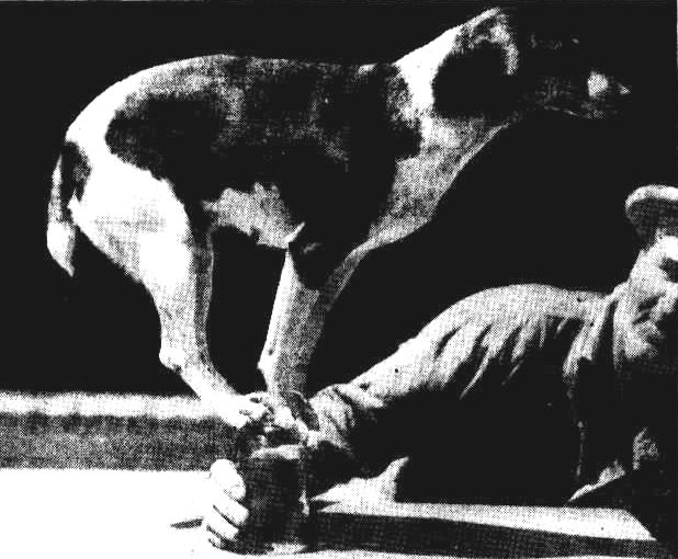 dog beer glass blance