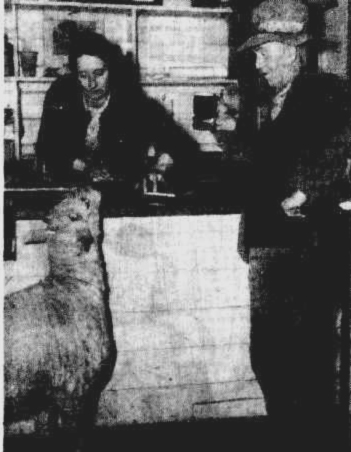 sheep bar 1943