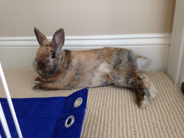 bunny relaxing