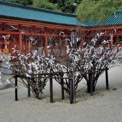 Heian Shrine, Kyoto: People write their wishes and tag it to this tree.