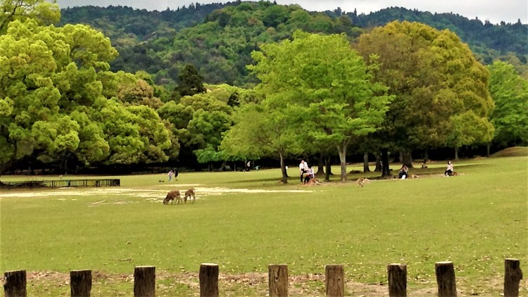 Nara Park in Nara City is a beautiful Park of 660 hectares at the foot of Mt. Wakakusa is home to 1200 free-roaming deer