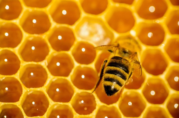 Busy Bee Syndrome