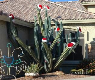 santa-cactus