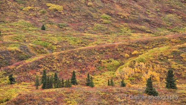Alaska, autumn, Alaska autumn, foliage, Kluane, Yukon, Haines Highway, tundra