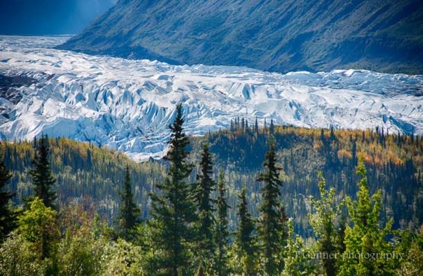 glacier, Matanuska Glacier, Alaska, Glenn Highway, foliage