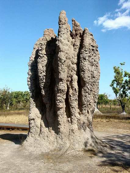 """""""A termite """"cathedral"""" mound produced by a termite colony is a classic example of emergence in nature."""" - Wikipedia (""""Emergence"""")"""