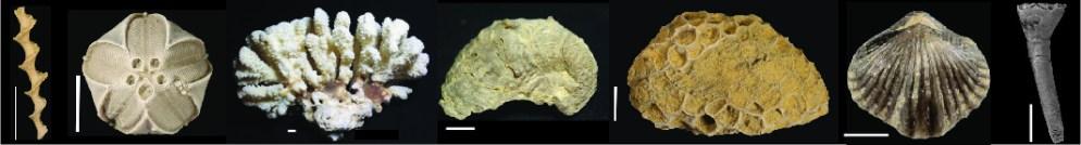 fossilbanner
