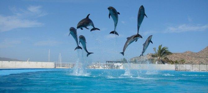 Top Cabo San Lucas Landmarks