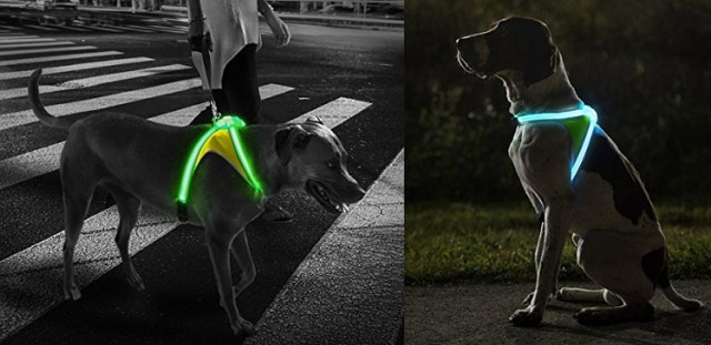 Multicolored LED Dog Collar - Cool Pets Gadgets