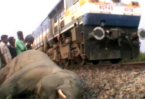 Elephant killed by Train in Jorhat