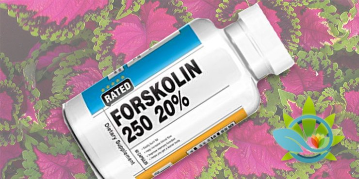 Wolfson Berg Forskolin 250